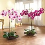 Как выращивать орхидеи?