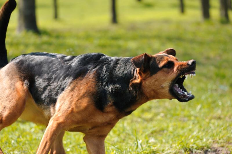 На Ямале еще одна жертва нападения бездомной собаки получит деньги от администрации