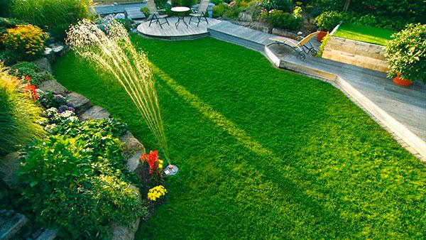 6 советов, как сделать газон на даче своими руками