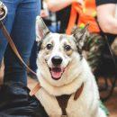 Тюменцев зовут на фестиваль домашних животных