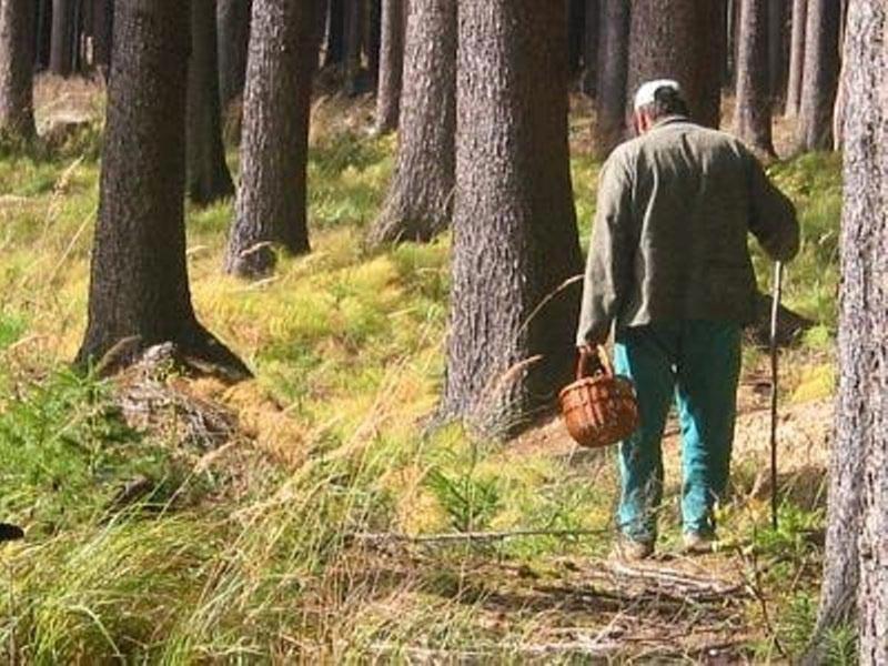МЧС нашли еще одного заблудшего в лесах