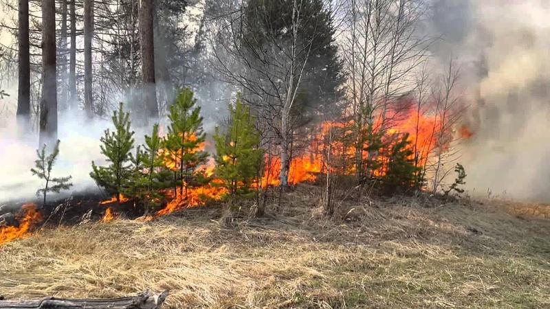 В Тюменской области горят леса