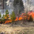 В Тюменской области из-за грозы вспыхнул лес