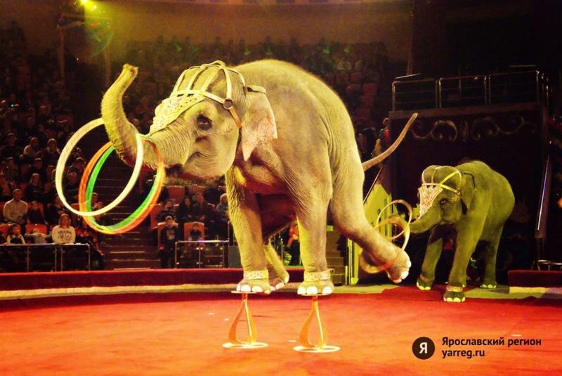 В Тюмени сотрудники МЧС помогли слонихе, у которой заболел зуб