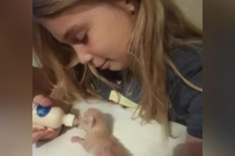 Пытаясь спасти своих котят, трагически погибла 10-летняя девочка