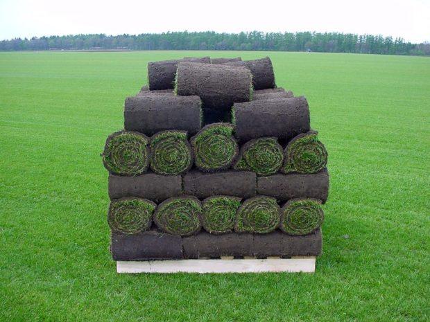 11 советов, как укладывать рулонный газон своими руками. Устройство рулонного газона