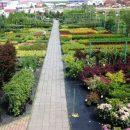Питомник для растений и деревьев