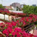 Топ-15 растений и цветов для балкона и лоджии