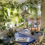 Топ 30 комнатных растений и цветов для кухни