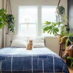 Топ-15 лучших растений для спальни + худшие виды